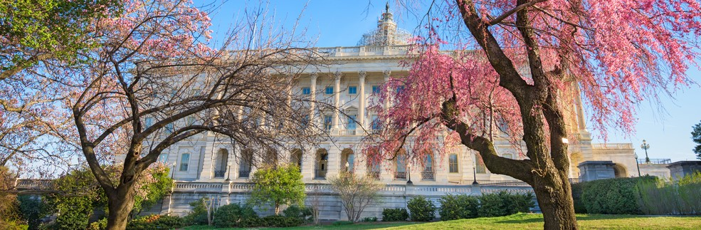 reduced Washington DC at the Capitol Building during spring season